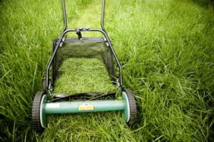 Four Reasons You Should Bag Your Zoysia Grass Clippings