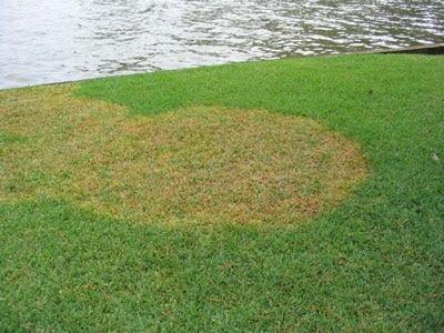 Fungicides on Fescue atlanta nashville chattanooga